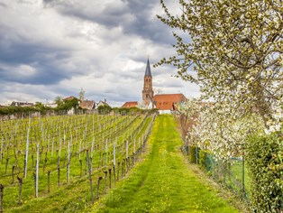 Vacances Hauenstein in der Pfalz