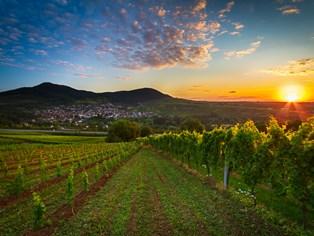 Vacances Landau in der Pfalz