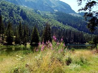 Vacances Alpes du Sud