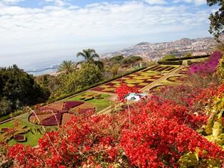 Vakantie Funchal
