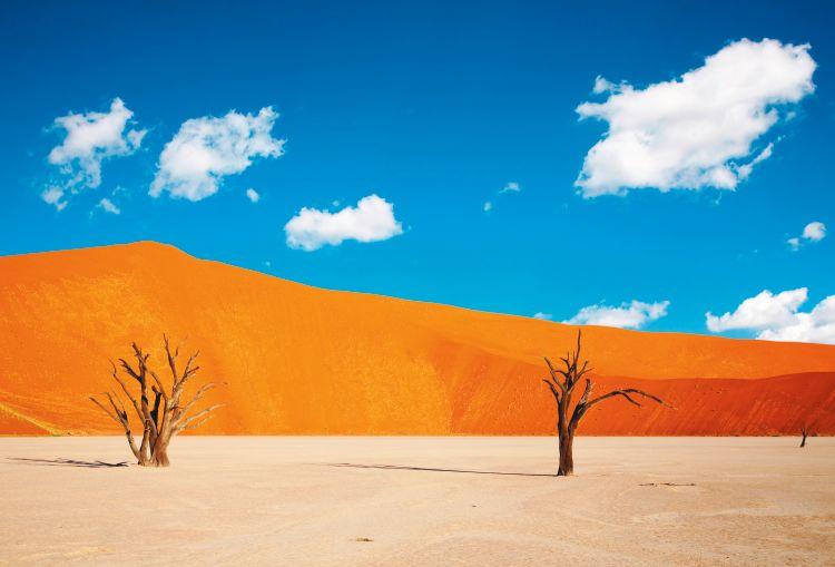 Namibië over leven in de woestijn  - foto 1