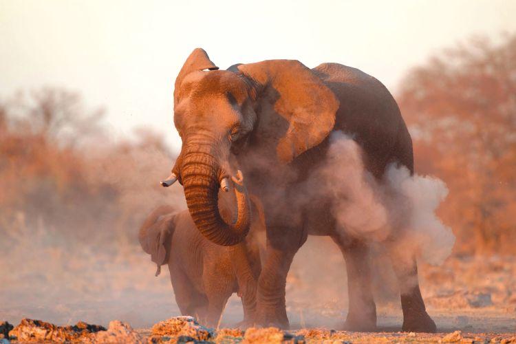 Namibië eindeloze horizonten en authentieke stammen  - foto 1