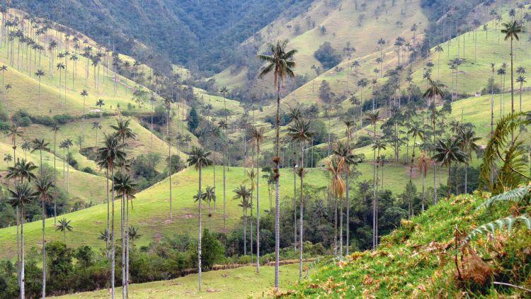 Colombia passie, koffie en cultuur <site>- NIEUW!</site> - foto 1