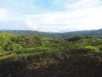 Maleisië & Borneo het beste van 2 werelden - foto 5