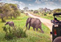 Tanzania In de schaduw van de Kilimanjaro - foto 5