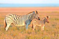 Namibië eindeloze horizonten en authentieke stammen  - foto 6