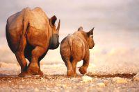 Namibië eindeloze horizonten en authentieke stammen  - foto 5