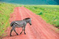 Tanzania in de schaduw van de Kilimanjaro - foto 6