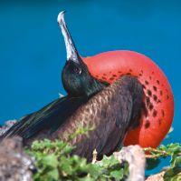 Ecuador & de Galápagos rijk verleden en bewust ecotoerisme - foto 5