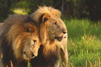 Zuid-Afrika uitbundige natuurpracht  - foto 5