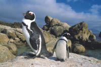 Zuid-Afrika uitbundige natuurpracht  - foto 6